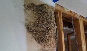 Water Damage Caused Mold Growth On Drywall